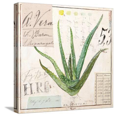 Aloe Vera…Sketchbook-Angela Staehling-Stretched Canvas Print