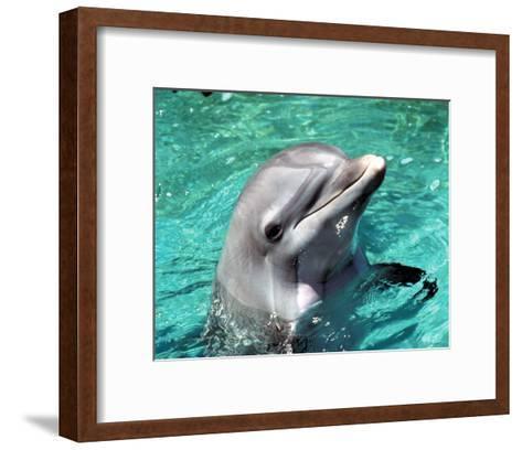 Flipper--Framed Art Print