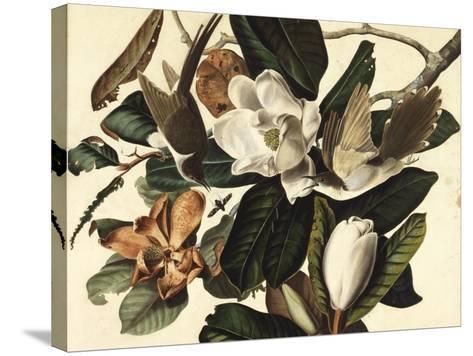 Black-Billed Cuckoo, 1822-John James Audubon-Stretched Canvas Print