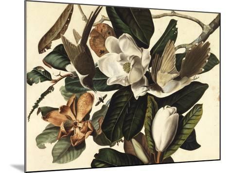 Black-Billed Cuckoo, 1822-John James Audubon-Mounted Giclee Print