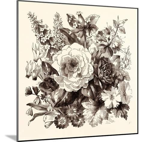 March. Epacris Delicata E. Purpurescens. Cyclamen Persicum. Scilla Praecox--Mounted Giclee Print