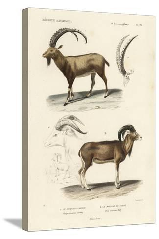 Antique Antelope and Ram Study-N^ Remond-Stretched Canvas Print