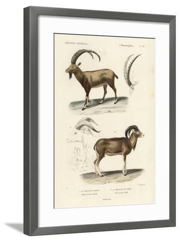 Antique Antelope and Ram Study-N^ Remond-Framed Art Print