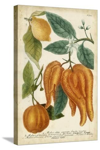 Exotic Citrus I-Weinmann-Stretched Canvas Print