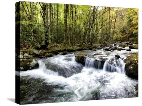 Waterslide-Danny Head-Stretched Canvas Print