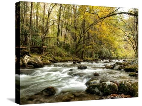 Creekside-Danny Head-Stretched Canvas Print