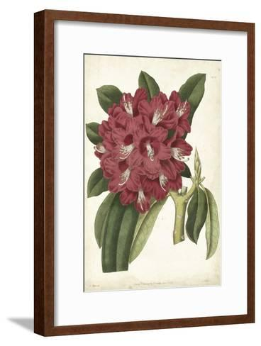 Antique Rhododendron II-Curtis-Framed Art Print