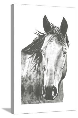 Wildlife Snapshot: Horse I-Naomi McCavitt-Stretched Canvas Print