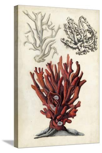Seashore Field Notes VI-Naomi McCavitt-Stretched Canvas Print