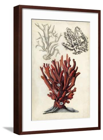 Seashore Field Notes VI-Naomi McCavitt-Framed Art Print