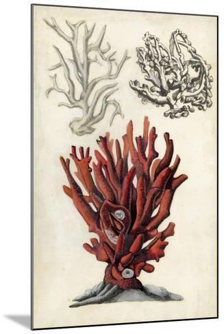 Seashore Field Notes VI-Naomi McCavitt-Mounted Art Print