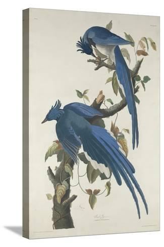 Columbia Jay, 1830-John James Audubon-Stretched Canvas Print