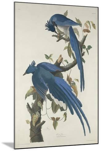Columbia Jay, 1830-John James Audubon-Mounted Giclee Print