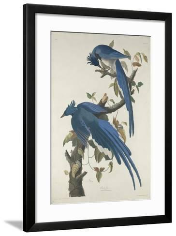 Columbia Jay, 1830-John James Audubon-Framed Art Print