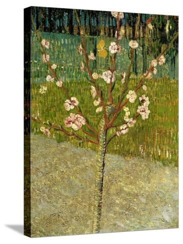 Almond Tree in Blossom, 1888-Vincent van Gogh-Stretched Canvas Print