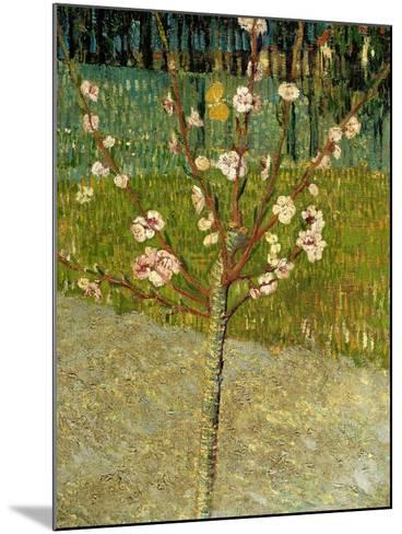Almond Tree in Blossom, 1888-Vincent van Gogh-Mounted Giclee Print