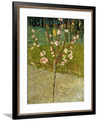Almond Tree in Blossom, 1888-Vincent van Gogh-Framed Art Print