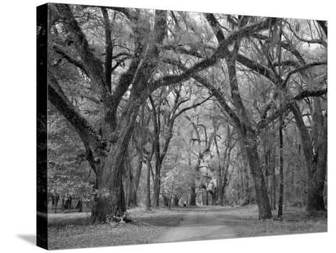 Blakeley State Park, Civil War-Carol Highsmith-Stretched Canvas Print