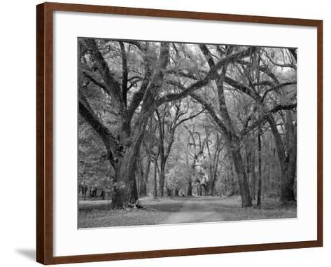 Blakeley State Park, Civil War-Carol Highsmith-Framed Art Print