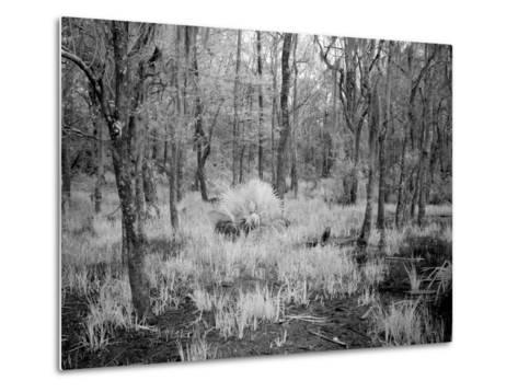 Blakeley State Park, Civil War-Carol Highsmith-Metal Print