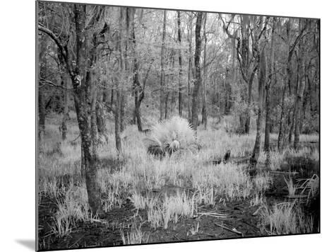 Blakeley State Park, Civil War-Carol Highsmith-Mounted Photo
