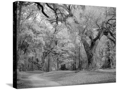 Blakeley State Park, Civil War-Carol Highsmith-Stretched Canvas Print