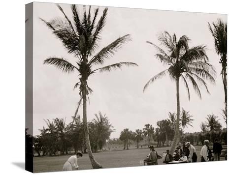 No. 1 Tee, Golf Links, Palm Beach, Fla.--Stretched Canvas Print