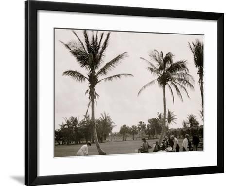 No. 1 Tee, Golf Links, Palm Beach, Fla.--Framed Art Print