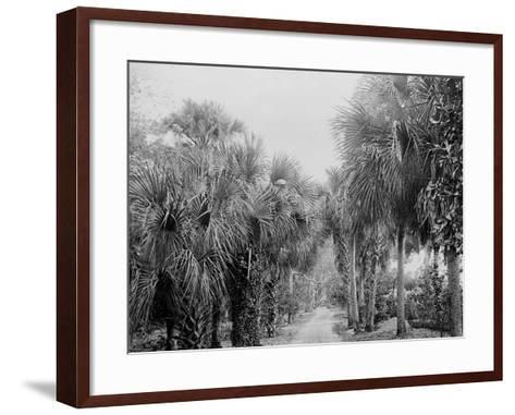 Palmettos at Bostroms, Ormond, Fla.--Framed Art Print