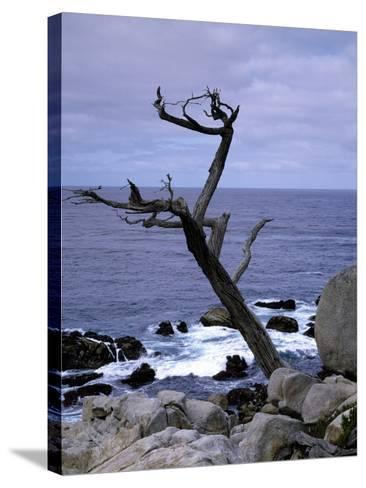Scraggly Cypress Tree on the Central California Coast-Carol Highsmith-Stretched Canvas Print