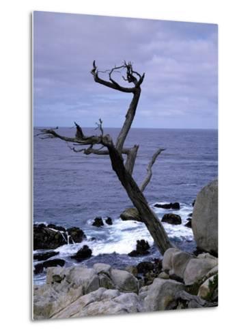 Scraggly Cypress Tree on the Central California Coast-Carol Highsmith-Metal Print