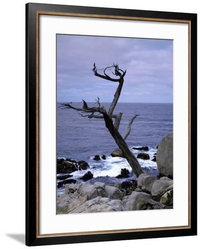 Scraggly Cypress Tree on the Central California Coast-Carol Highsmith-Framed Art Print