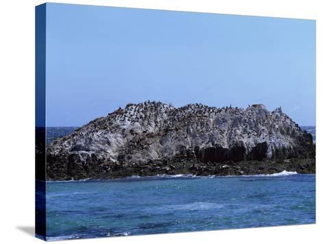 Gulls Off the California Coast-Carol Highsmith-Stretched Canvas Print