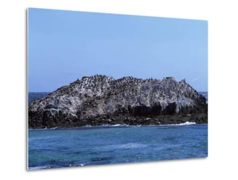 Gulls Off the California Coast-Carol Highsmith-Metal Print