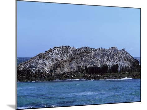Gulls Off the California Coast-Carol Highsmith-Mounted Photo