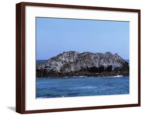 Gulls Off the California Coast-Carol Highsmith-Framed Art Print