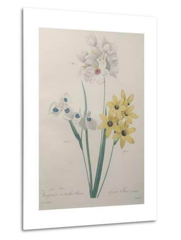 Corn Lilly with Blue Spots-Pierre-Joseph Redoute-Metal Print
