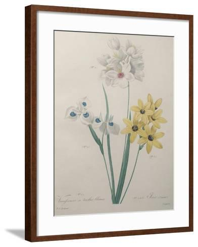 Corn Lilly with Blue Spots-Pierre-Joseph Redoute-Framed Art Print