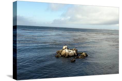 Monterey Bay-Carol Highsmith-Stretched Canvas Print