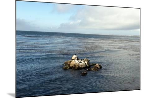 Monterey Bay-Carol Highsmith-Mounted Photo