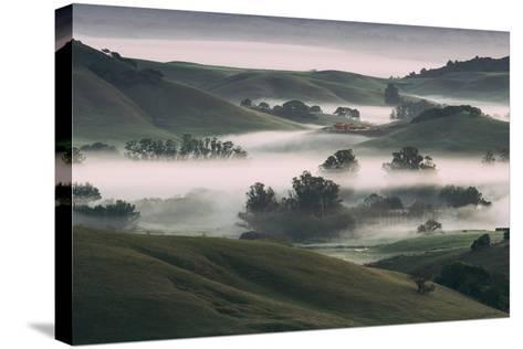 Dream Landscape, Tuscany in California, Petaluma Sonoma County-Vincent James-Stretched Canvas Print