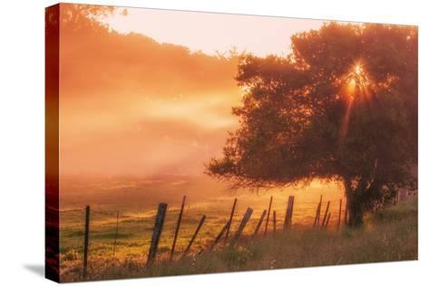 Sunburst Tree, Sunrise in Petaluma, Sonoma Valley, California-Vincent James-Stretched Canvas Print