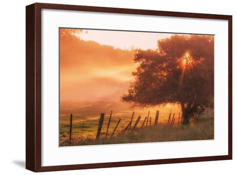 Sunburst Tree, Sunrise in Petaluma, Sonoma Valley, California-Vincent James-Framed Art Print