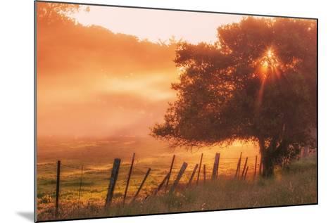 Sunburst Tree, Sunrise in Petaluma, Sonoma Valley, California-Vincent James-Mounted Photographic Print