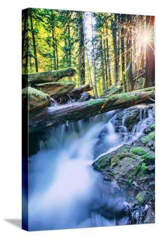 Sun and Panther Creek Flowing Through Forest, Columbia River Gorge, Washington-Vincent James-Stretched Canvas Print