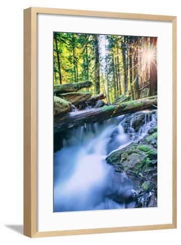 Sun and Panther Creek Flowing Through Forest, Columbia River Gorge, Washington-Vincent James-Framed Art Print