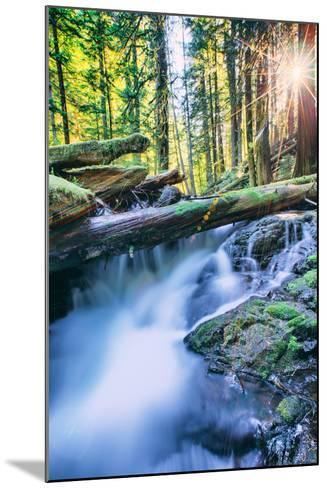 Sun and Panther Creek Flowing Through Forest, Columbia River Gorge, Washington-Vincent James-Mounted Photographic Print