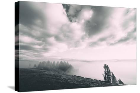 Dreamy Walk, Black and White, Hayden Valley, Yellowstone National Park-Vincent James-Stretched Canvas Print
