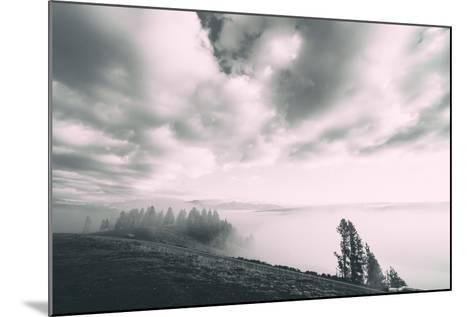 Dreamy Walk, Black and White, Hayden Valley, Yellowstone National Park-Vincent James-Mounted Photographic Print