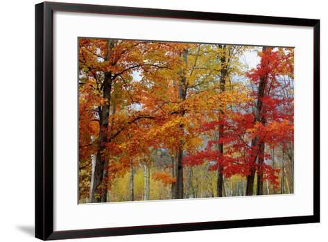 Autumn Foliage, Lincoln New Hampshire, New England-Vincent James-Framed Art Print